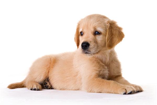 """Pris sur """"http://images-et-photos.com/wp-content/uploads/sites/3/2015/03/reglement_chien.jpg"""""""